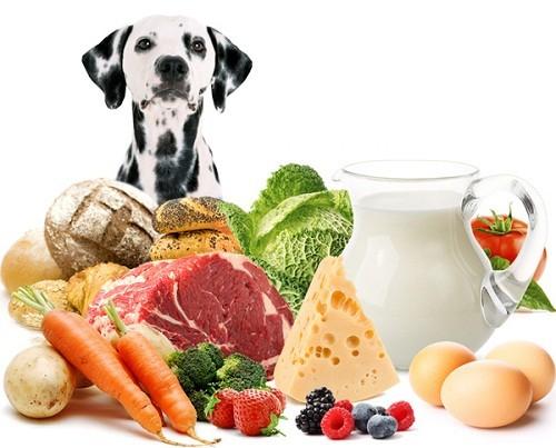 Кормление собак натуральными продуктами
