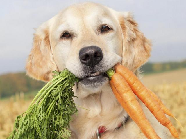 Овощи в рационе собак